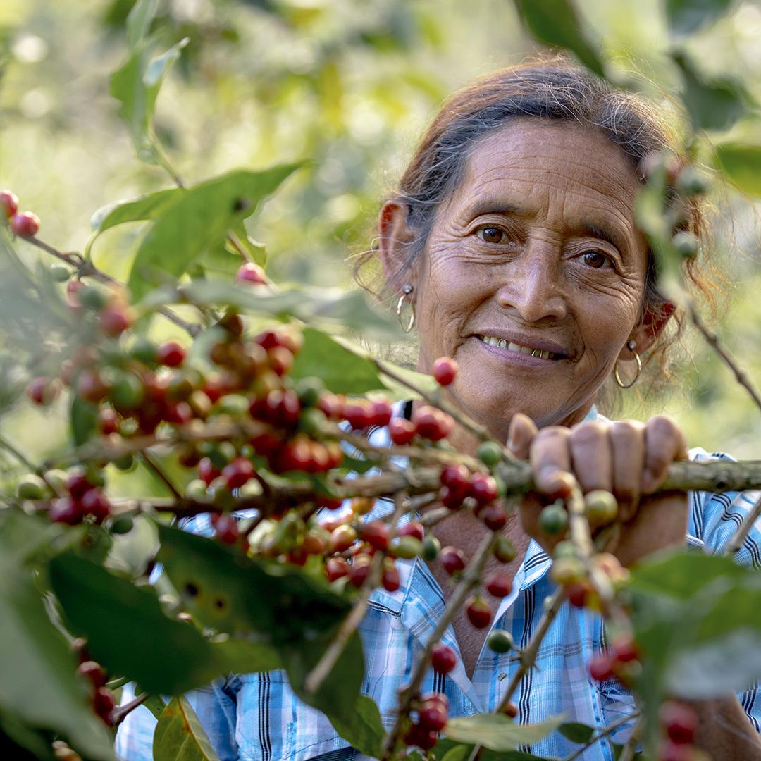 Lähes 70 % kahvista tuotetaan alle 5 ha tiloilla, joilla enemmistö työstä tehdään oman perheen voimin. Naiset tekevät noin 70 % kahvinviljelyn maatöistä. Kuva: Thom Alva