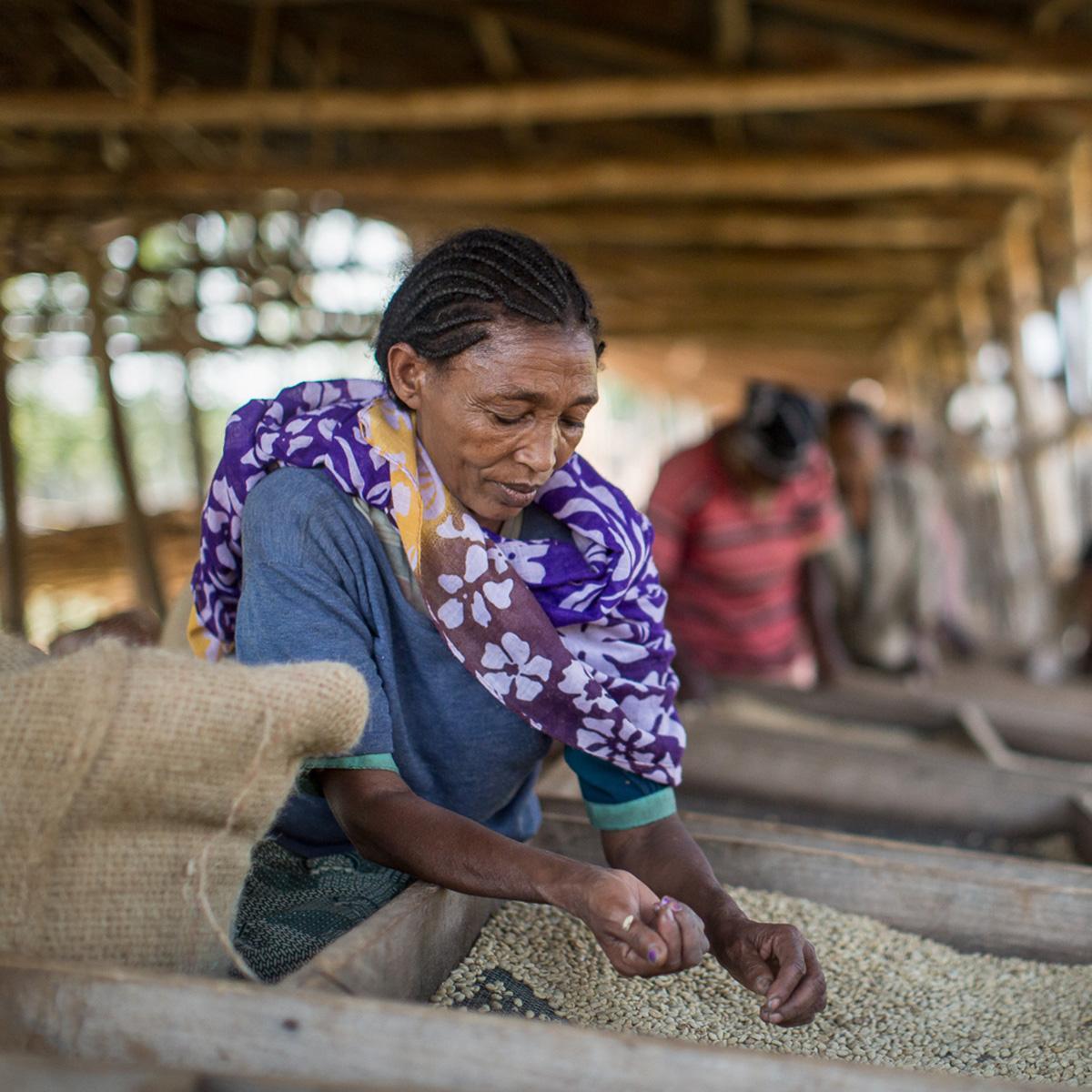 Heikoimmassa asemassa ovat köyhien pienviljelijöiden tiloille kiireisimpinä aikoina palkatut kausityöntekijät. Heikon toimeentulon ohella naisviljelijöiden ja -työntekijöiden asemaa hankaloittavat muun muassa syrjintä, seksuaalinen häirintä ja vähäiset perhevapaat. Kuva: Chris Perry.