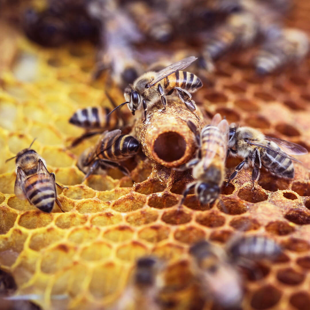 Reilun kaupan hunajakenno ja mehiläiset