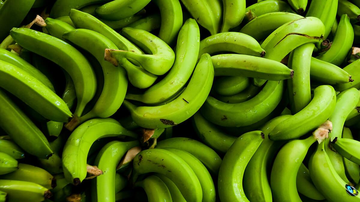 Vihreitä Reilun kaupan banaaneja läjässä.