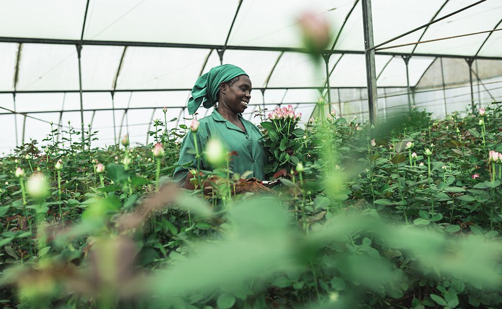 Nainen kukkaviljelmän keskellä.